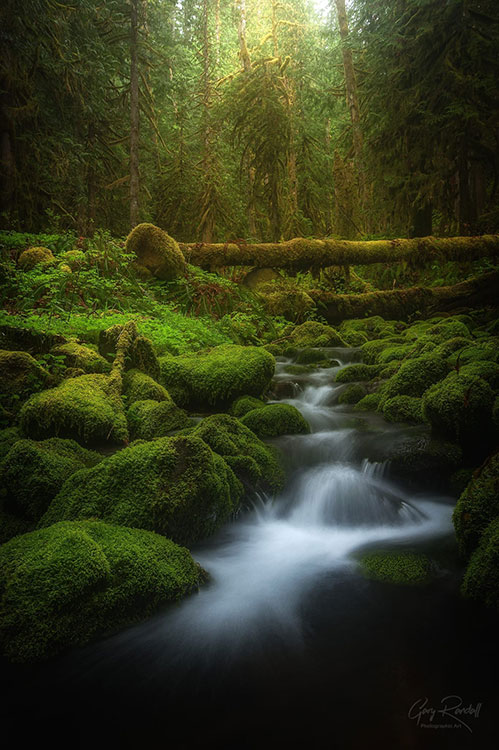 Wild moss by the streams in PNW | Photography by Gary Randall