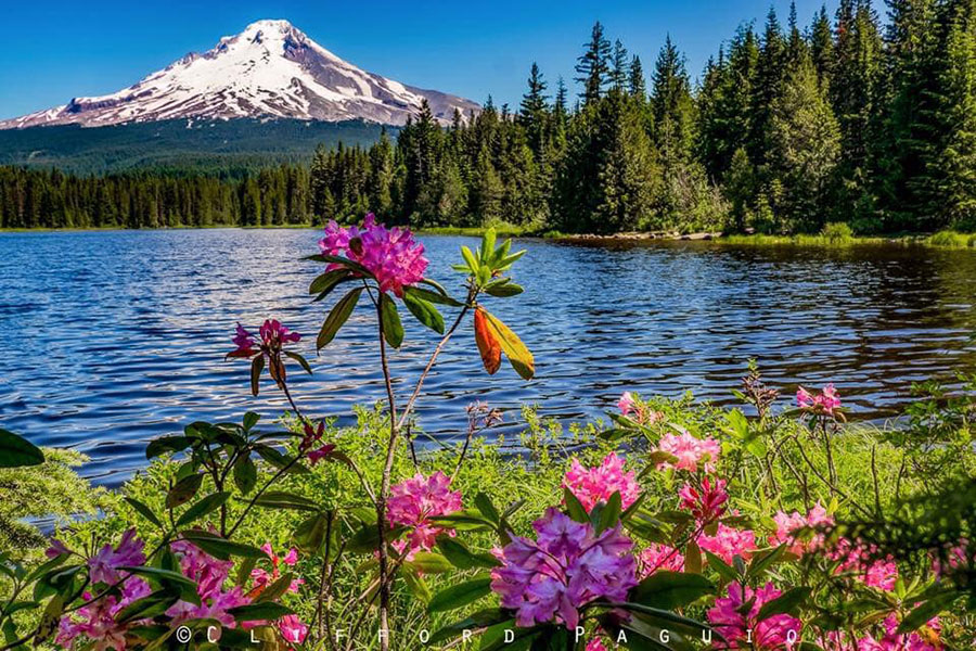 Trillium Lake with Mt Hood and Wildflowers