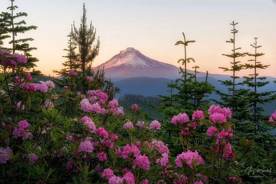 Wild Rhodes and Mount Hood | Photography by Gary Randall