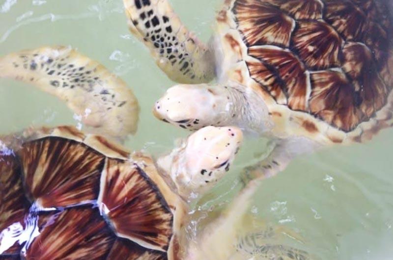 Penang Turtle Sanctuary