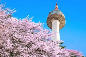 N Seoul Tower with cherry blossom