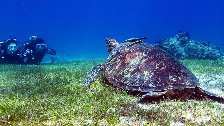 Scuba-diving in Bohol